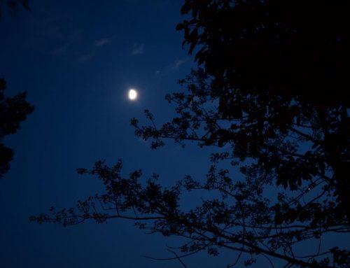Nightspecial